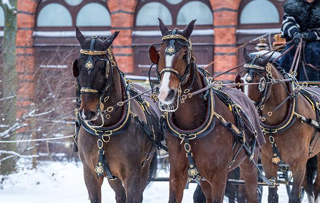 Kungens hästar Hovstallet